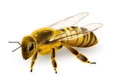 Lifelike bee design vector