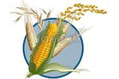 Link tovector wheat corn of drawing Lifelike