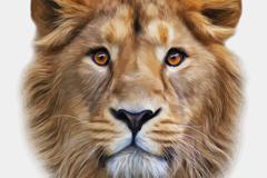 Lifelike lions head design vector