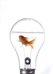 Link toLight bulb in goldfish pictures