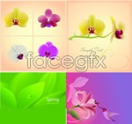 Link toLily orchid vector
