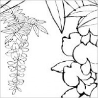 Link toLine drawing of flowers -12