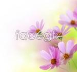 Link toLittle daisy psd