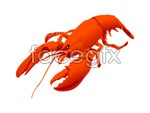 Lobster vector material