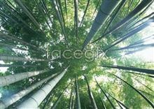 Link toLook up bamboo forest high definition pictures