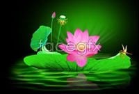 Link toLotus lotus dragonfly high definition pictures