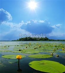 Link topicture scenic pond Lotus