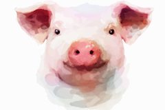 Link toLovely watercolor pig head vector