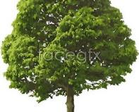 Link toLush green trees vector green trees