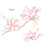 Link toMagnolia flower line drawing vector