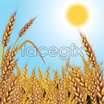 Link toMature wheat vector