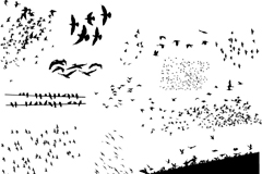 Link toMigratory birds silhouettes vector