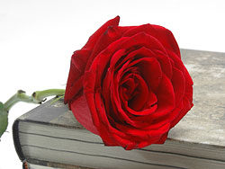 Link toOld books and roses 03-hd pictures