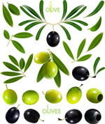 Link toOlive oil and olives vector