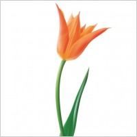 Link toOrange tulip