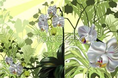 Orchid boutique realism vector