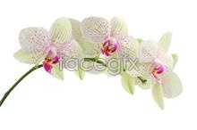 Link toOrchid picture material