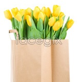 Link toPaper bag of tulip psd