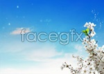 Link toPeach blossom in full bloom psd