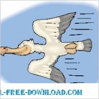 Link toPelican flying