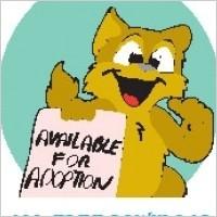 Link toPet adoption cat