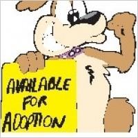 Link toPet adoption dog