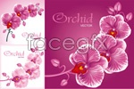 Link toPhalaenopsis vector material