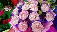 Link toPink carnation pictures