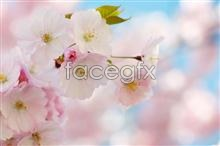 Link topicture beauty flower Pink