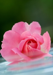 Link toPink flower picture material download