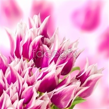Link topicture flower Pink