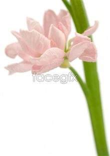 Link toPink flowers beautiful hd pictures