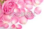 Link toPink rose petals psd