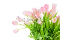 Link toPink tulips bouquet hd pictures