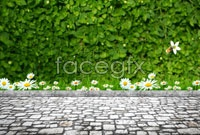 Link toPlant the vines on the wall of the road hd pictures
