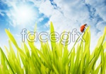 Link toPlants and lady beetle psd