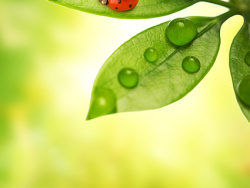 Link toPlants and ladybug picture material-8