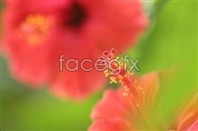 Link topicture close-up buds flower Plants