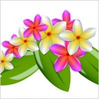 Link toPlumeria vector flowers