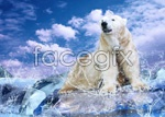 Link toPolar bears and penguins psd