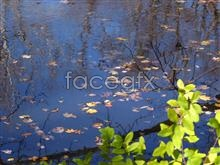 Link topicture leaf Pond