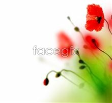 Link toPoppy flower background images