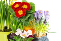 Link toPotted flowers pictures