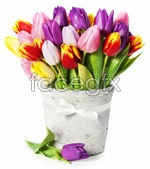Link toPotted tulips picture psd