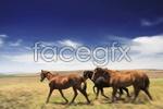 Link toPrairie horse psd
