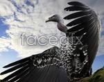 Link toPre bird psd