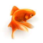 Link toPretty little goldfish vector