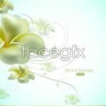 Link toPure white petals in bloom vector