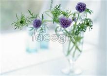 Link toball flower Purple