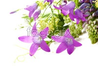 Link toPurple flowers backgrounds high resolution images